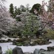 満開の桜と桃の花(勝沼まで桃の花を見に行きました)
