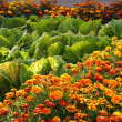 蝶や蜂などでにぎわう花畑