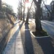冬の弱い陽ざしに誘われて・・・散歩