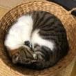 あきらめない猫
