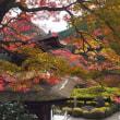 善峯寺の紅葉(4)