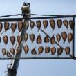 鮎のシーズンが到来です。鮎は、今年も大島養魚場の活き鮎です。