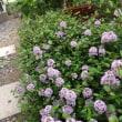 朝の庭の様子