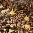 枯葉の中で、