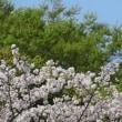 春風駘蕩日々韜晦