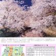 「冬に咲くさくらライトアップ」クラウドファンディングご支援のお願い