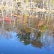 研究林の紅葉2