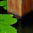 蓮池の睡蓮