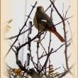 ツタの紅葉と鳥たち