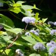 保健所から森の観察会に駆け付けイチゴや桑の実を味わう午後の森定休日。