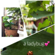 A ladybug!