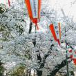 上野のお花見