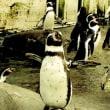 旭山動物園!