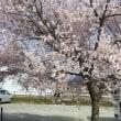 ふらっと柳原 桜散策と歌レク