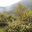 中山間地は今日も雨