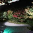 岐阜 中山園芸さん訪問 & 京都 紅葉見ごろ・・・!?
