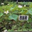 8月5日 見本園の開花状況 2