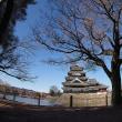 ★松本城に来たお坊っちゃまオシドリはぼっちオシドリだった🐦 2018