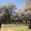 佐久平に春が来た(^。^)