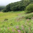 長野県諏訪郡下諏訪町にある八島湿原で、ノビタキの群れに出会いました