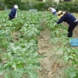 旬の野菜を給食に! ~学校栄養士の農家訪問・新稲の巻~