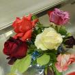 5月の花がイッパイ!一番咲きのバラも
