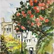 神田川遊歩道の柿