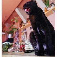 写真展「The days of cats and coffee」
