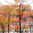 今日は良い天気。昨日は香嵐渓、今日は自転車!