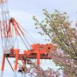 神戸の河津さくらは早くも葉桜に