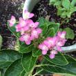 庭の花で茶花