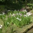 清澄庭園から隅田川辺り