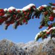 #928: 札幌南区はもうすでに雪が、、、