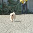 飛行犬&ラン