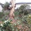 内神様の木の枝を伐採
