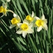 春を楽しむ 4月30日
