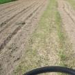 畑、草刈りと耕し