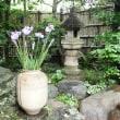 茶室にGO!月例会「貞恭庵で一服如何でしょうか?」5/27開催