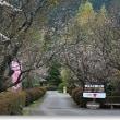 冬桜の季節Ⅴ