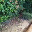 真夏の屋敷内水道管洩れ騒動復旧日記
