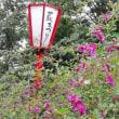 仙台市野草園 萩まつり