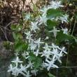 白い花の名前は