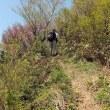 ヤマシャク咲く十種ヶ峰