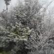 霧氷と紅葉を堪能した丹沢;塔ノ岳(今年39回目)