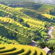 ベトナムのホーチミン市農業商談会で、日系10社がPR!