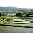 麦の風景、米の風景