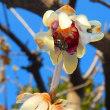 カンアオイの花と今年一番の桜の花
