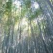 竹取物語 新年に御飾りする門松の竹を取りに竹林へ