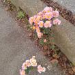 路傍の花々