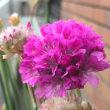 お転婆な花